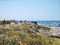 Pt. Pinos Coastal Trail