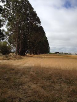View along potential trail corridor