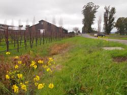 Adjacent winery & vineyards
