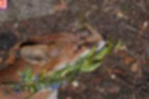 FOX661L.jpg