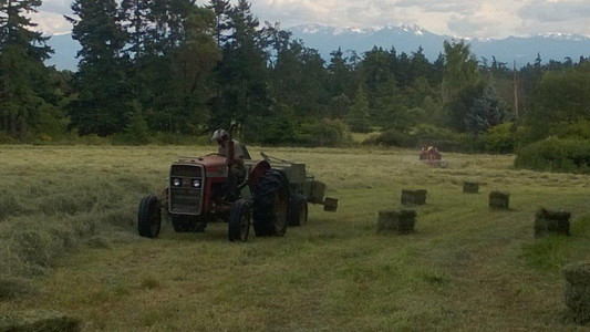 Each year the farm makes about 7,000 bales of hay. Some of this is used for feeding the sheep, the rest is sold for horse hay.