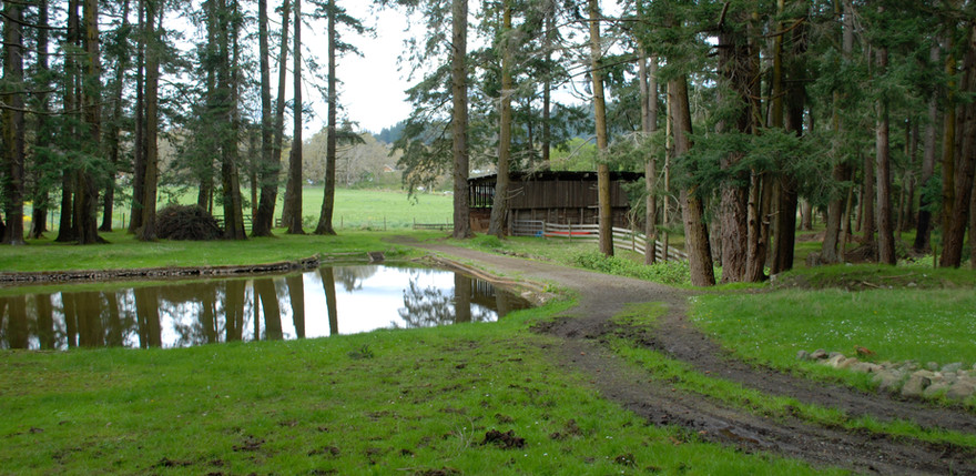 Ponds on the farm are home to ducks, otter and even the native Painted Turtle. The building on the right was once a hay-drying shed but is now used for equipment storage.