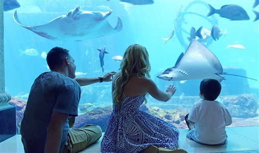 UNDER THE SEA VIEWING