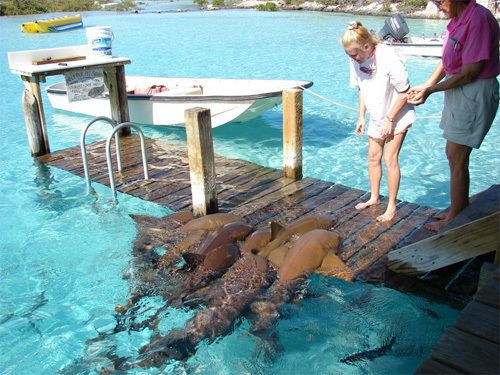 PETTING THE SHARKS