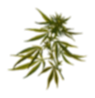 cannabis-1299824.png