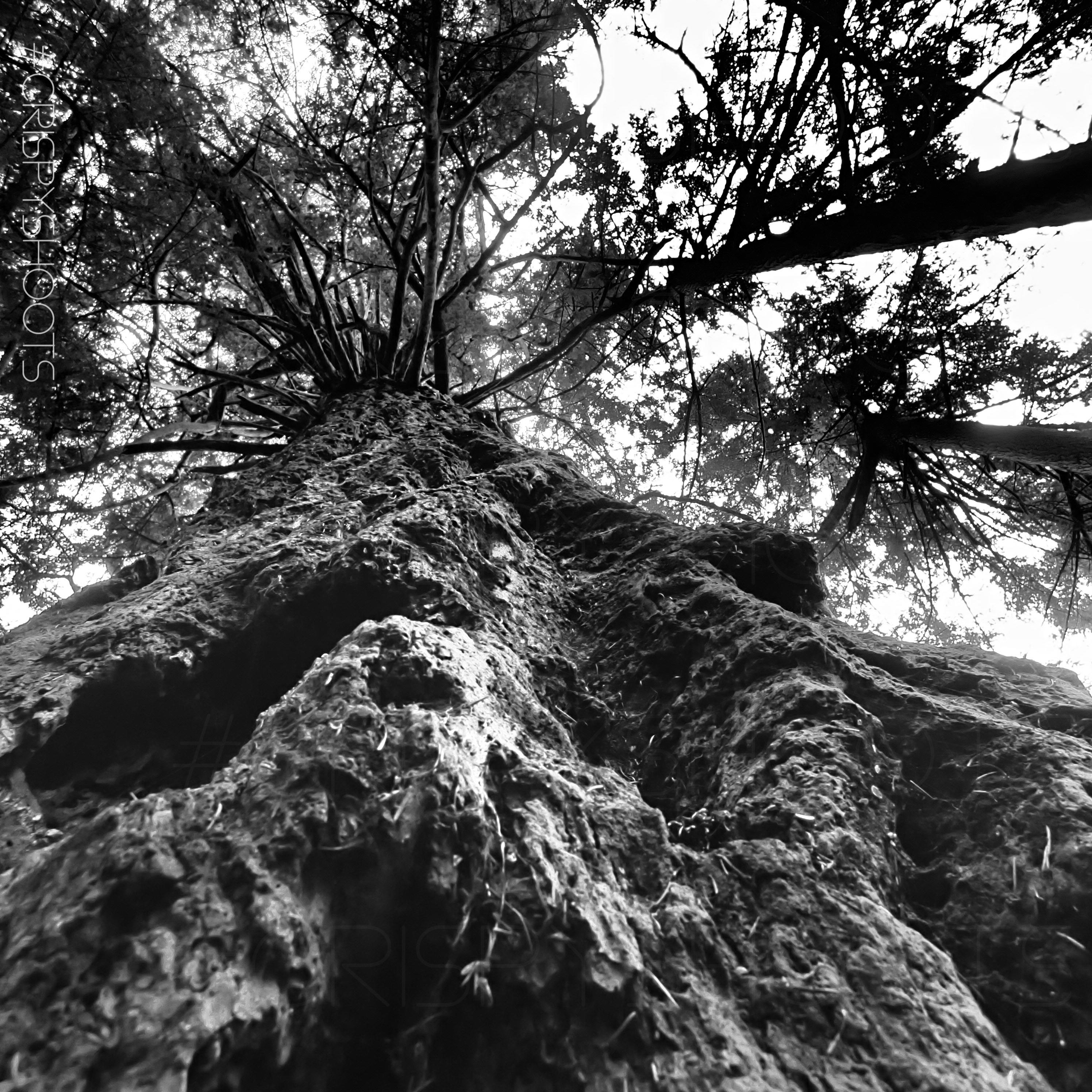 Mountaineer Tree