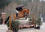 hunter jumper showing