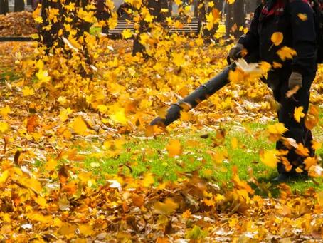 Stop aux nuisances sonores des souffleuses à feuilles .... suite