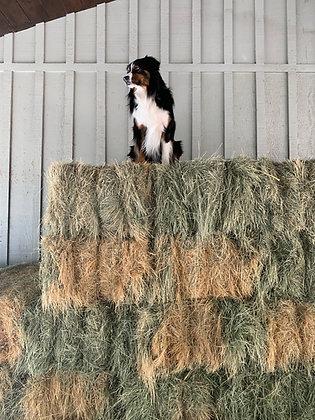 Sponsor a Bale of Hay