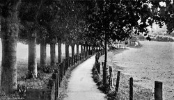 Pathfields - path and lime trees