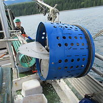 The mechanical washer used to wash sponge off swimming scallops
