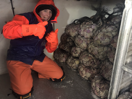 BIG NEWS - We now freeze our scallops at sea!!
