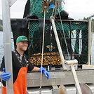 Joel Collier smiling with a trawl full of wild swimming scallops