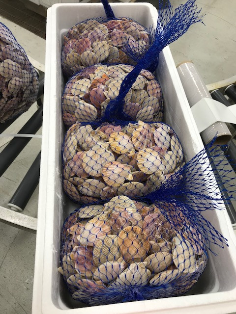 Scallops in styro