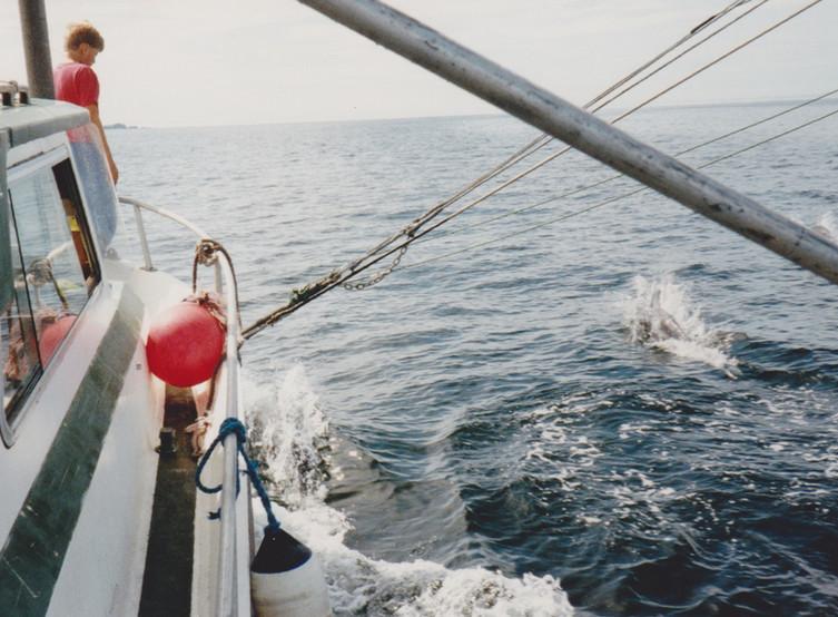 Joeland the porpoise 1992