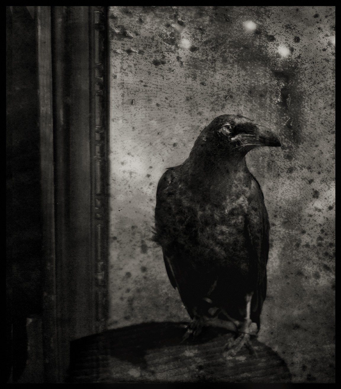 raven on the table