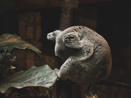 9 Secrets To Sleep Like A Koala During Covid-19