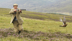 What is driven grouse shooting?