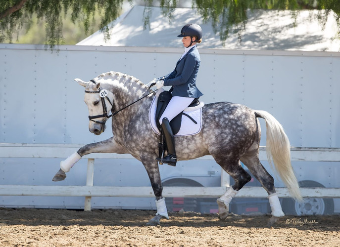 Kim McGrath dressage trainer and rider dapple gray horse