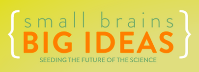 Logo Smallbrains