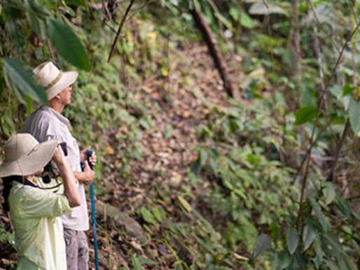 Carbon Offsetting: Making Travel Sustainable with Galavanta Colombia