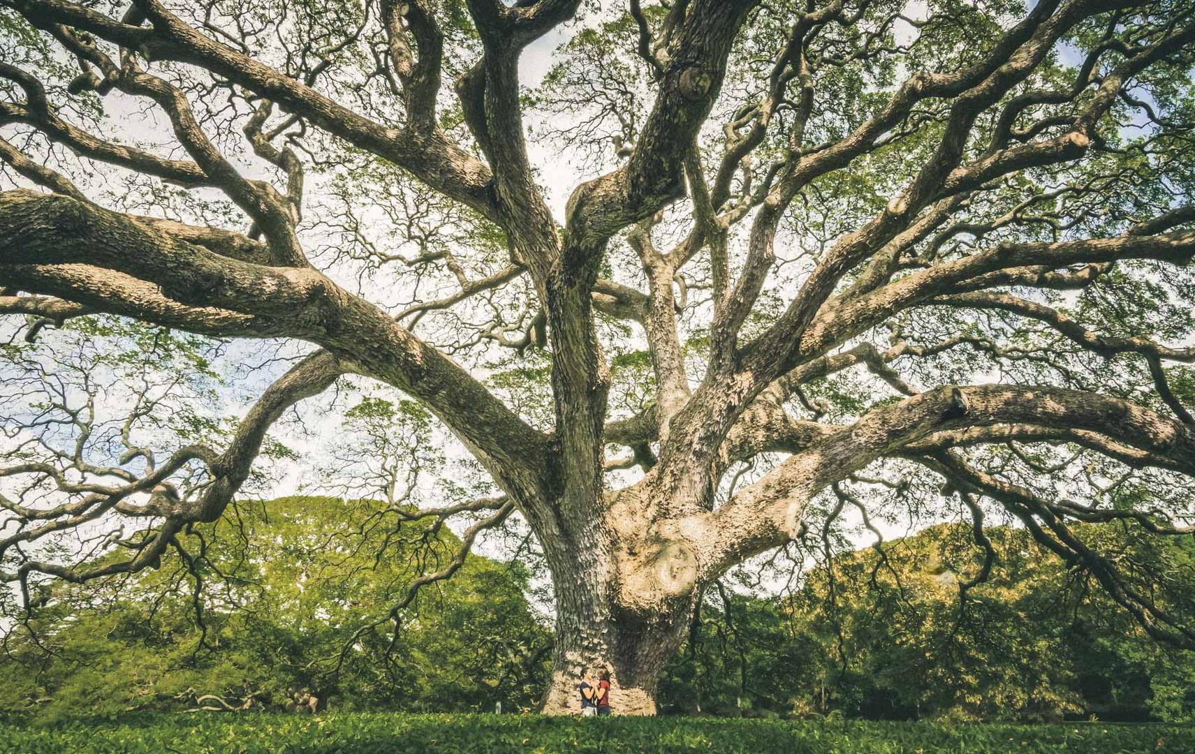Natural Tree Landscape Engagement