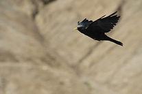 Vogel-Flugwesen