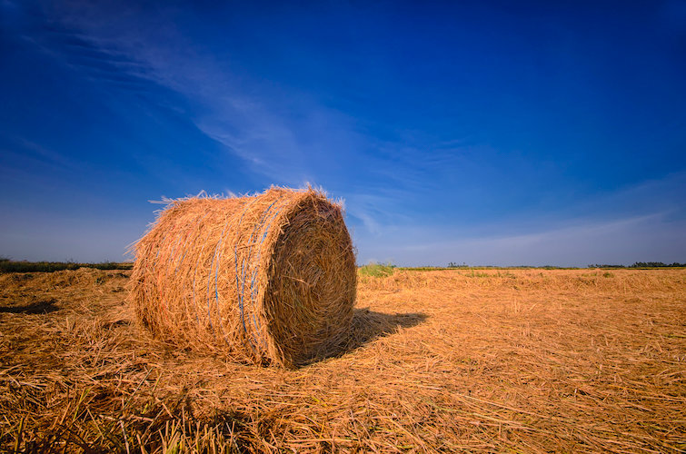Rolled Hay.jpg