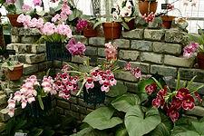 Serre_orchidees_JBM.jpg