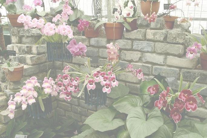 Serre_orchidees_JBM_estompe.jpg