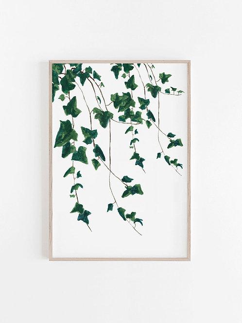 Green Trailing Ivy Print - Galatians 5:1