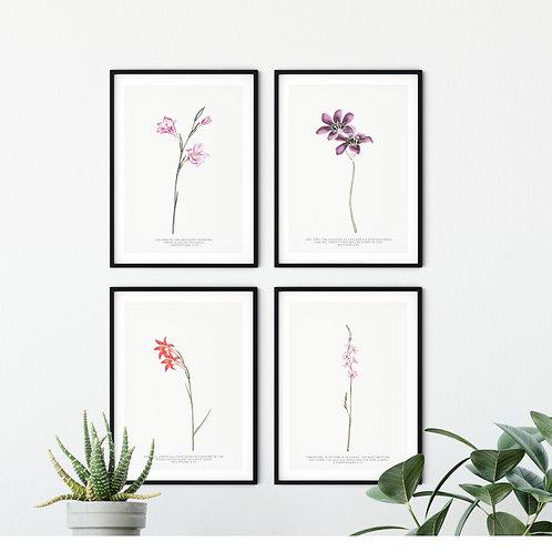 Wild Flower Print Set