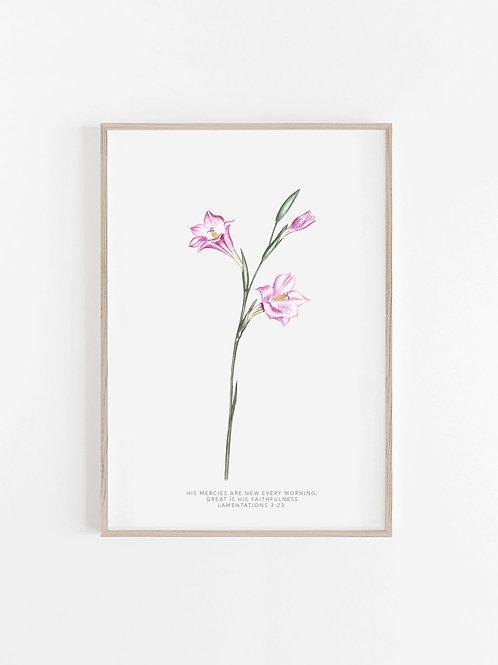 Pink Lily Wild Flower Watercolour Print - Lamentations 3:23