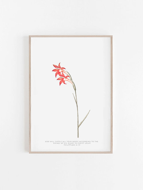 Red Lily Wild Flower Watercolour Print - Philippians 4:19