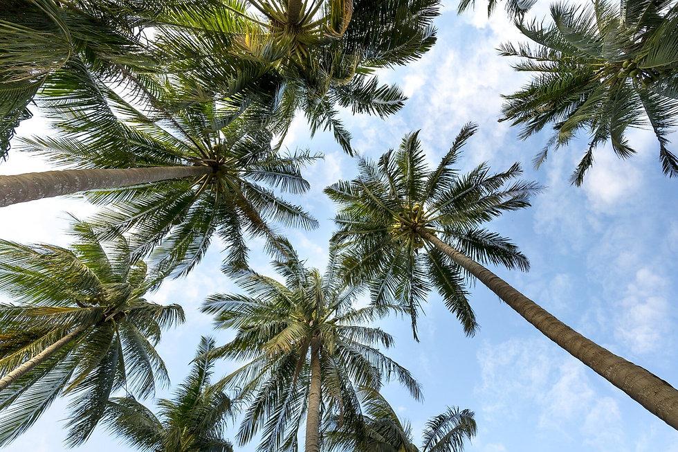 palmtree pic.jpg