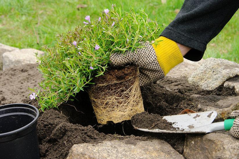 planting image.jpg