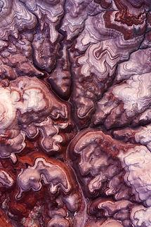 Synapse-web-sig.jpg