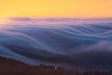 california-dreamin-web-sig.jpg