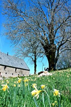 Auvergne April 2017 (4)