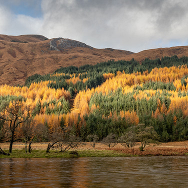 River Orchy and Colourful Larch - 26990.jpg