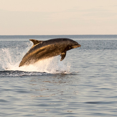 Dolphin - 12828LR (1 of 1).jpg