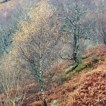 Ben Cruachan autumn.jpg