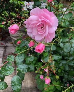Martin's favourite flower