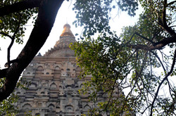 Sacred Bodhi Tree and The Temple.jpg