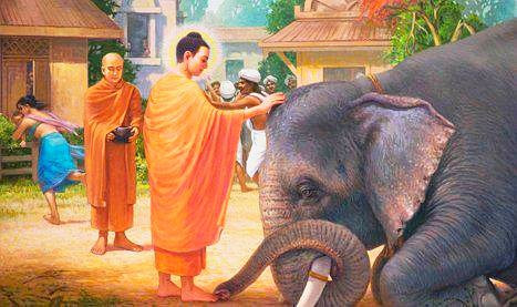 The Panicked Tusker | The Story of Lord Gautama Buddha