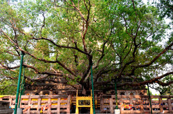 West Site of Temple and Bodhi Tree.jpg