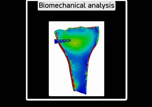 Fixator for a novel knee implant