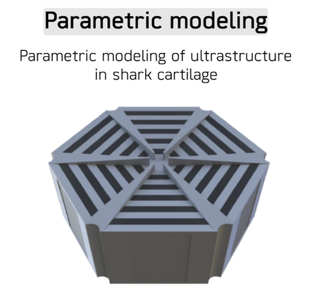 Ultrastructural modeling of tessera