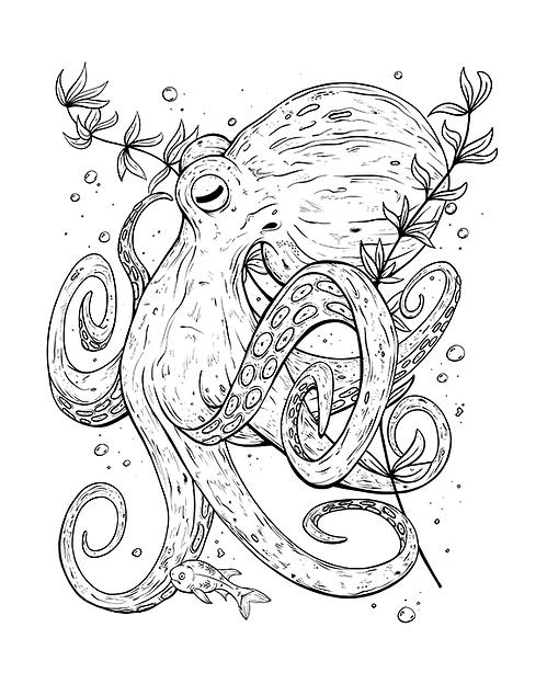 Octopus_72dpiwebsite_lewiswinter.png