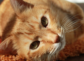Monthly BLOG: Giardia in Cats